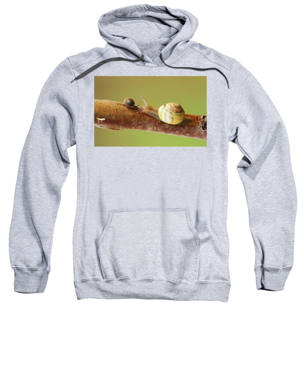 Tet A Tet Sweatshirt featuring the photograph Tete A Tete by Mircea Costina Photography