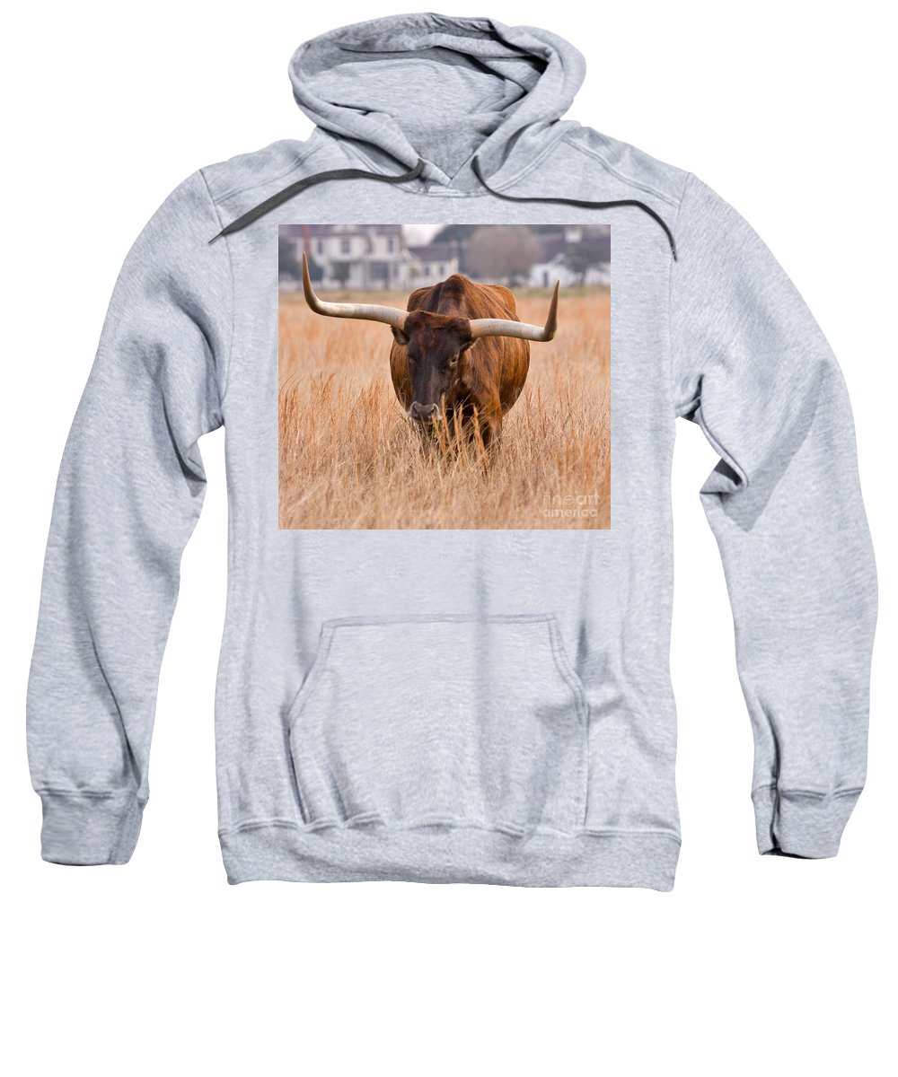 Animal Sweatshirt featuring the photograph Texas Longhorn by Louise Heusinkveld