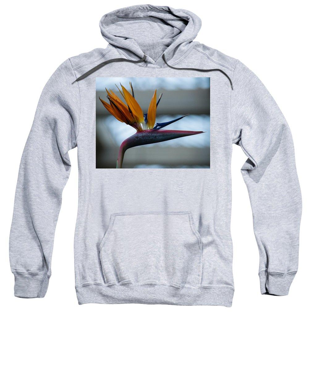 Bird Sweatshirt featuring the photograph The Bird Of Paradise by Wanda J King