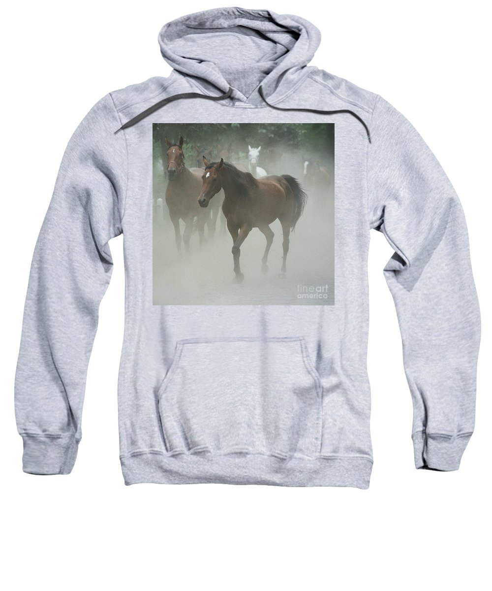 Arabian Horse Sweatshirt featuring the photograph The Daughters Of A Desert by Angel Ciesniarska