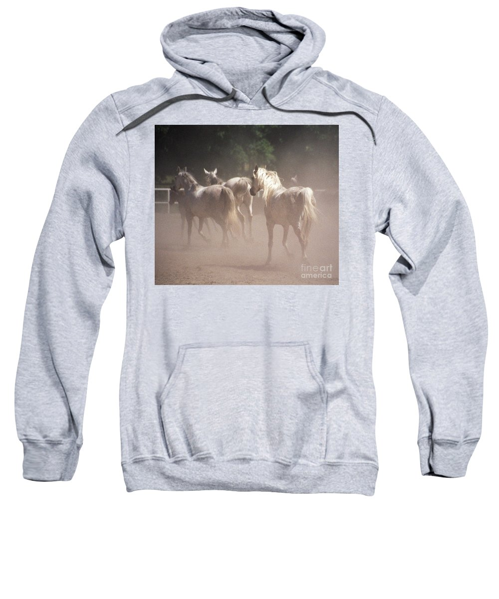 Arabian Horse Sweatshirt featuring the photograph The Daughters Of The Desert by Angel Ciesniarska
