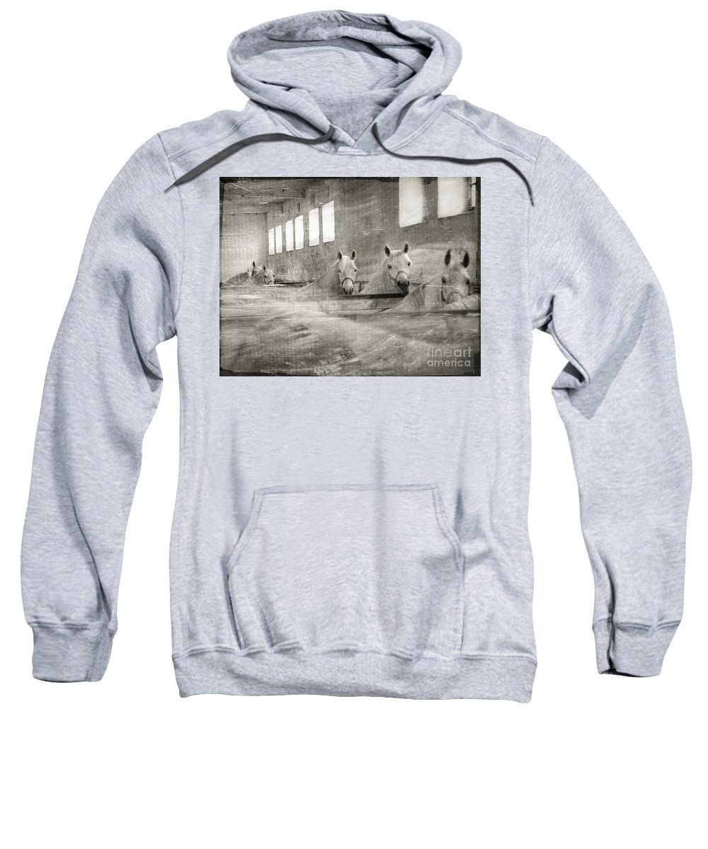 Grey Sweatshirt featuring the photograph The Grey Mares by Angel Tarantella