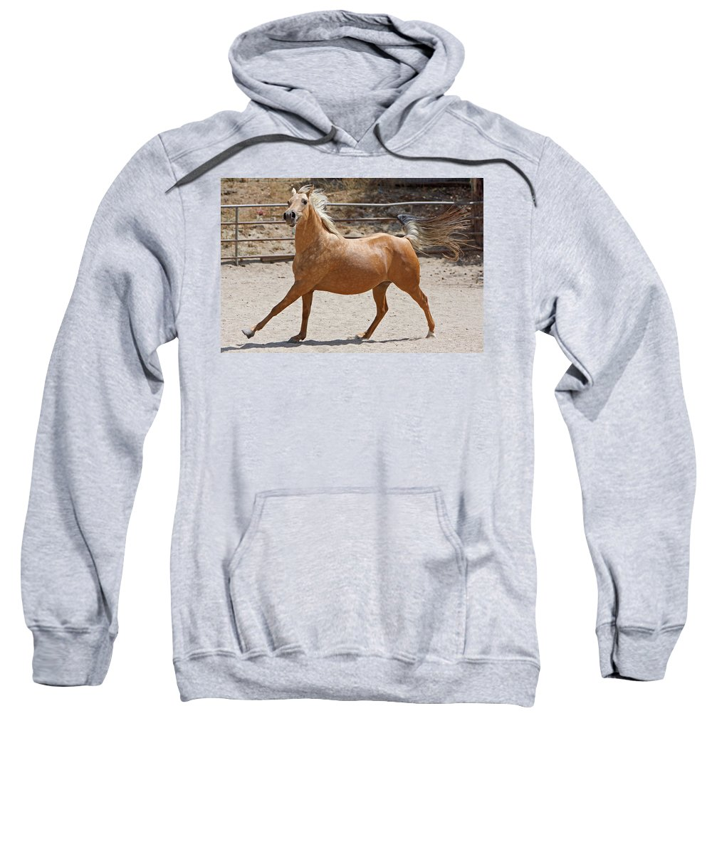 Horse Sweatshirt featuring the photograph The Pose by Shoal Hollingsworth