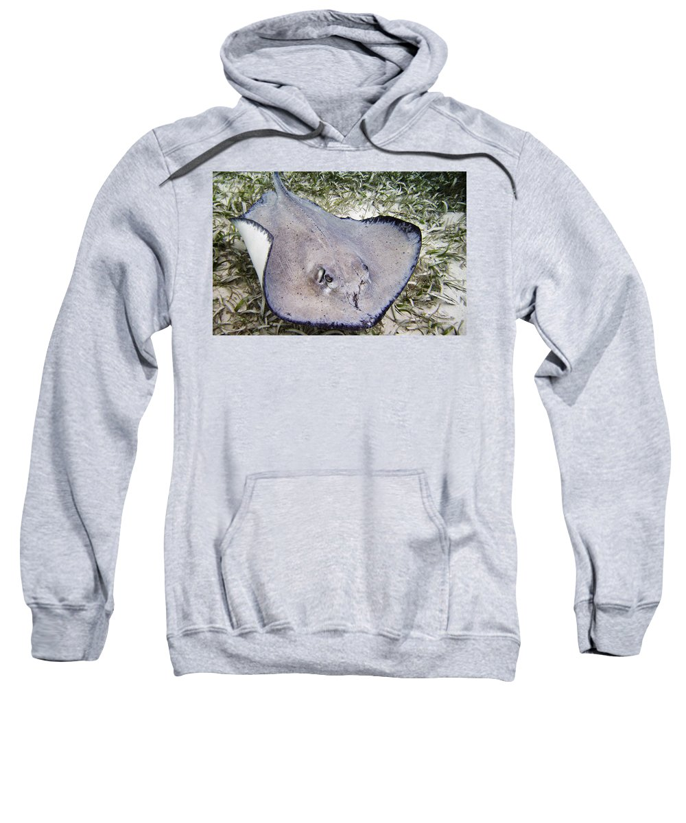 Ocean Sweatshirt featuring the photograph The Survivor by Terry Melius