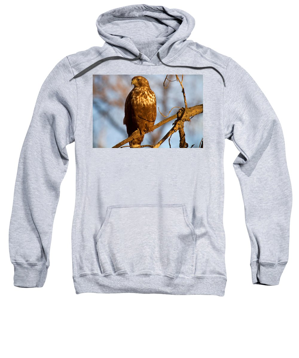 Hawk Photograph Sweatshirt featuring the photograph The Watcher In The Woods by Jim Garrison