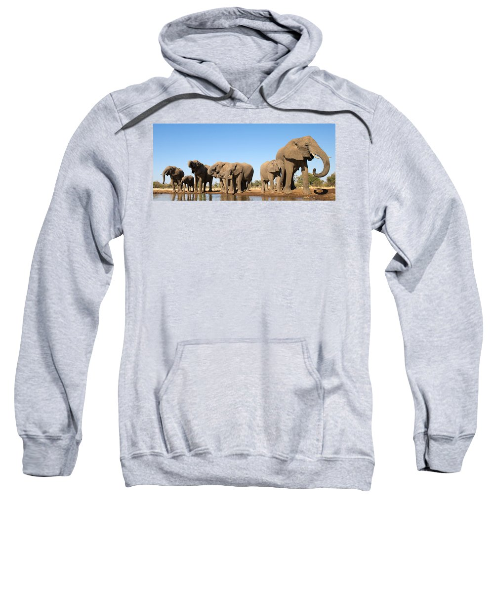 African Elephant Sweatshirt featuring the photograph Thirsty Elephant Herd by Max Waugh