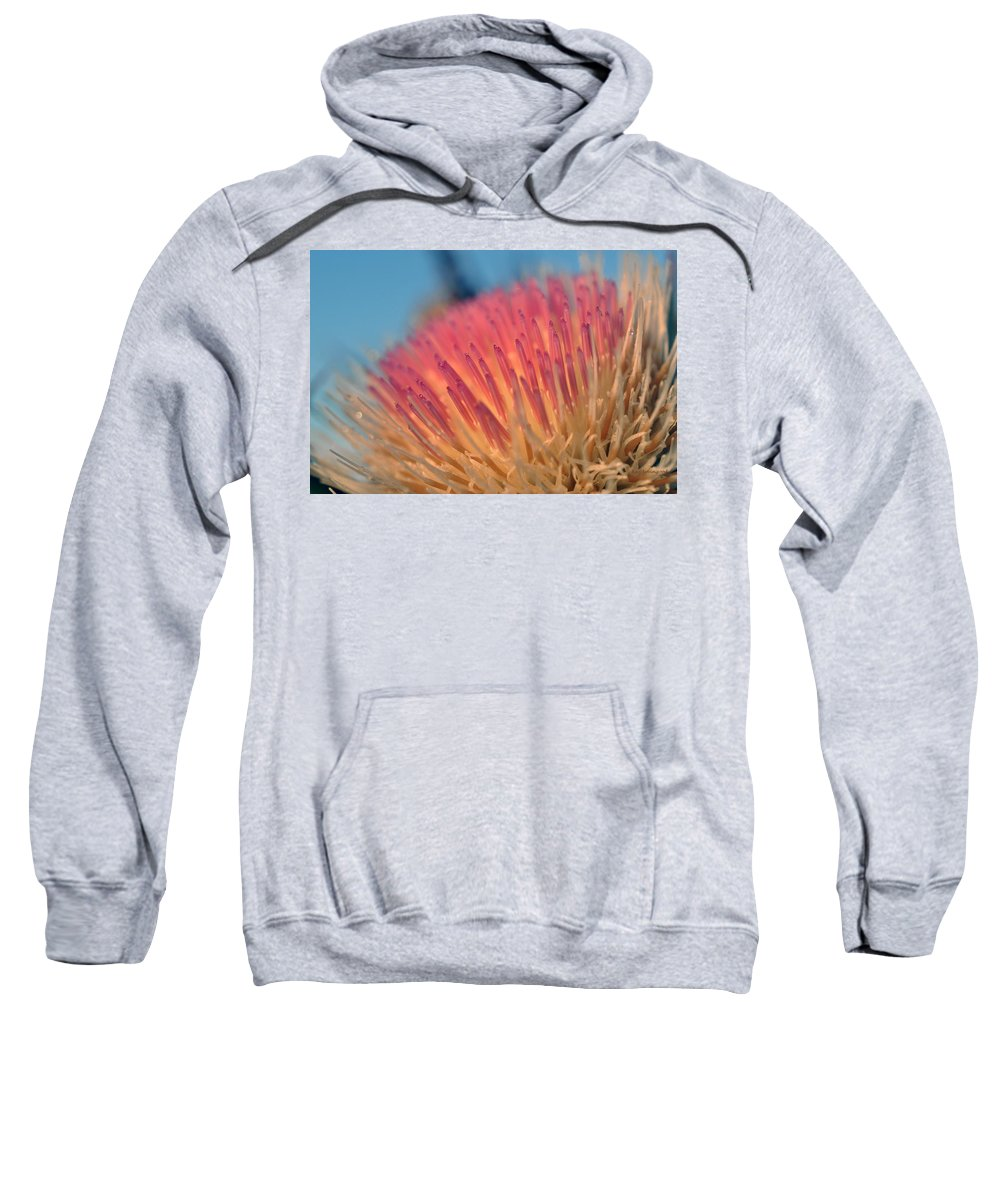 Plant Sweatshirt featuring the photograph Thistle by Kay Lovingood