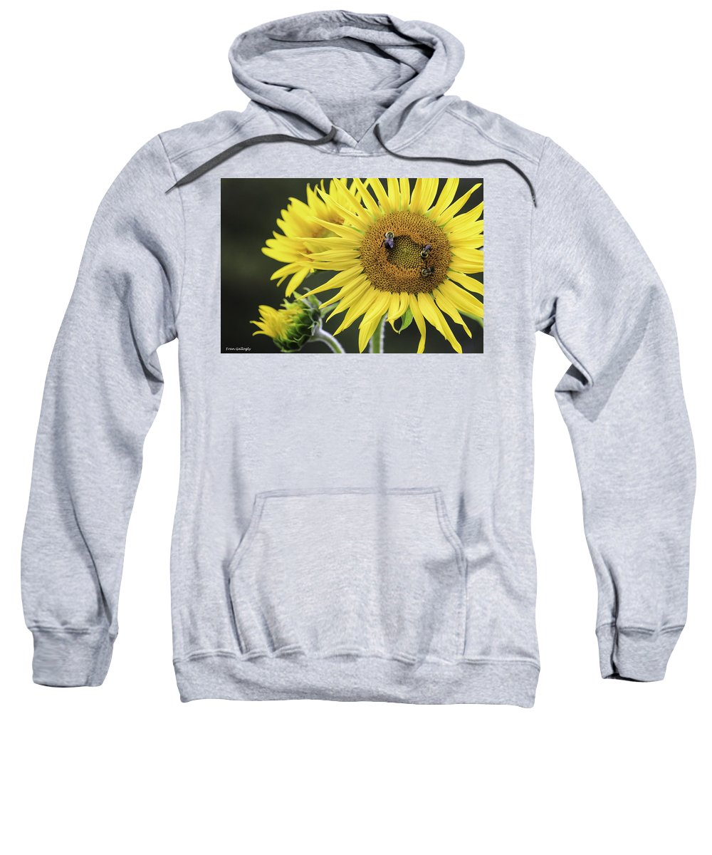 Bees Sweatshirt featuring the photograph Three Bees On A Sunflower by Fran Gallogly