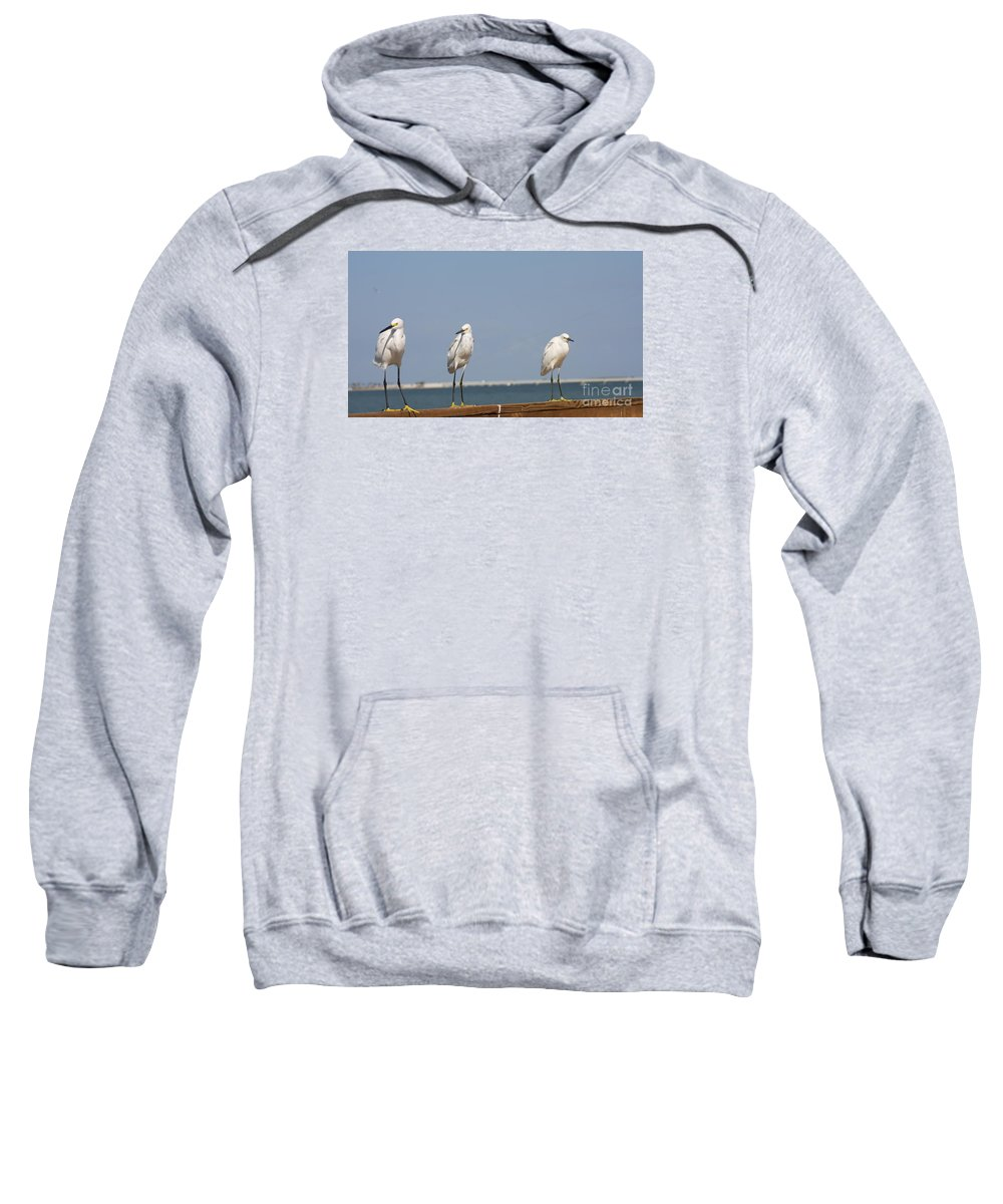 Snowy Egret Sweatshirt featuring the photograph Three Buddies by Christiane Schulze Art And Photography