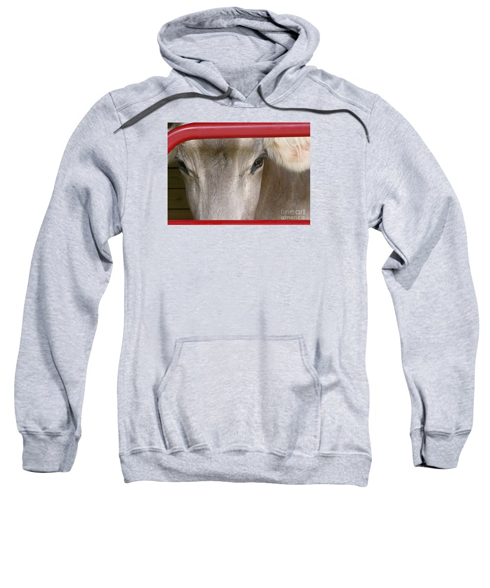 Cow Sweatshirt featuring the photograph Through The Gate by Ann Horn