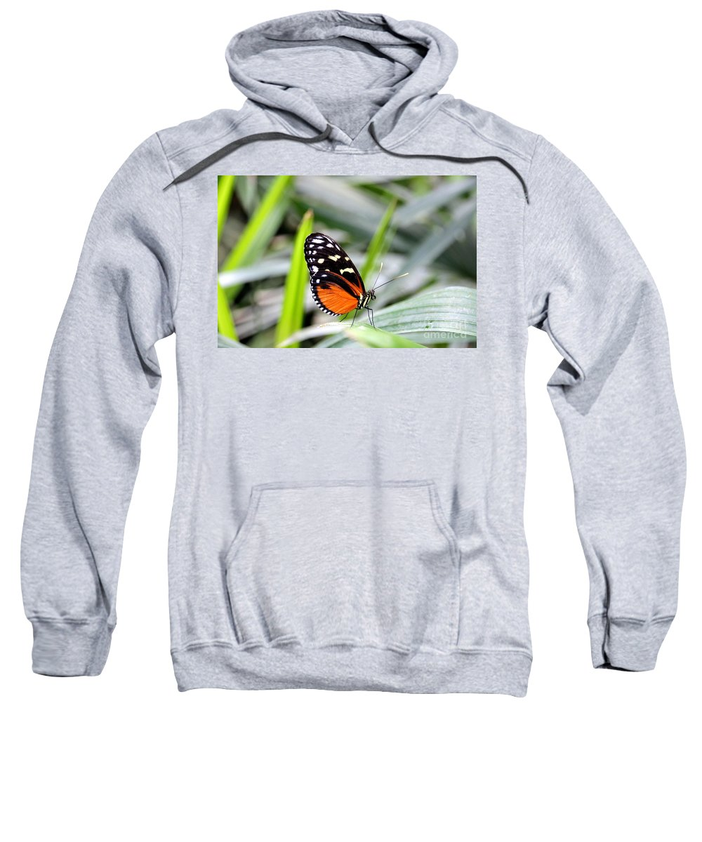 Butterfly Sweatshirt featuring the photograph Tiger Longwing Butterfly by Amanda Mohler