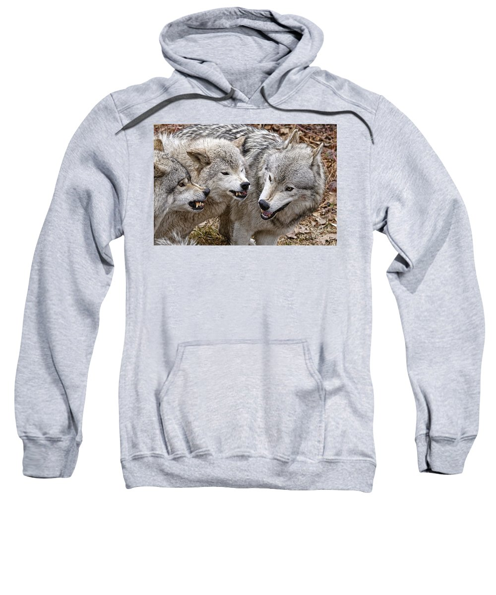 Timber Wolf Sweatshirt featuring the photograph Timber Wolf Pictures 213 by World Wildlife Photography