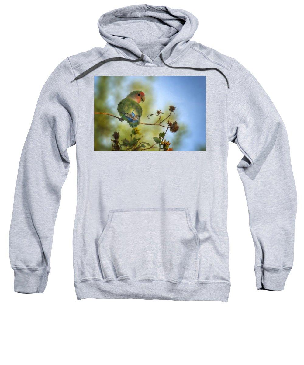 Lovebird Sweatshirt featuring the photograph To Love A Lovebird by Saija Lehtonen