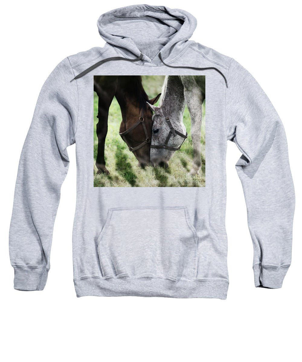 Horses Sweatshirt featuring the photograph Together by Angel Tarantella
