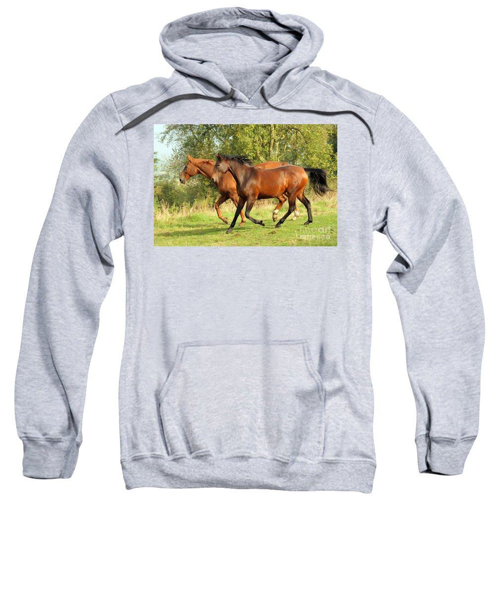 Horse Sweatshirt featuring the photograph Together Now by Angel Ciesniarska