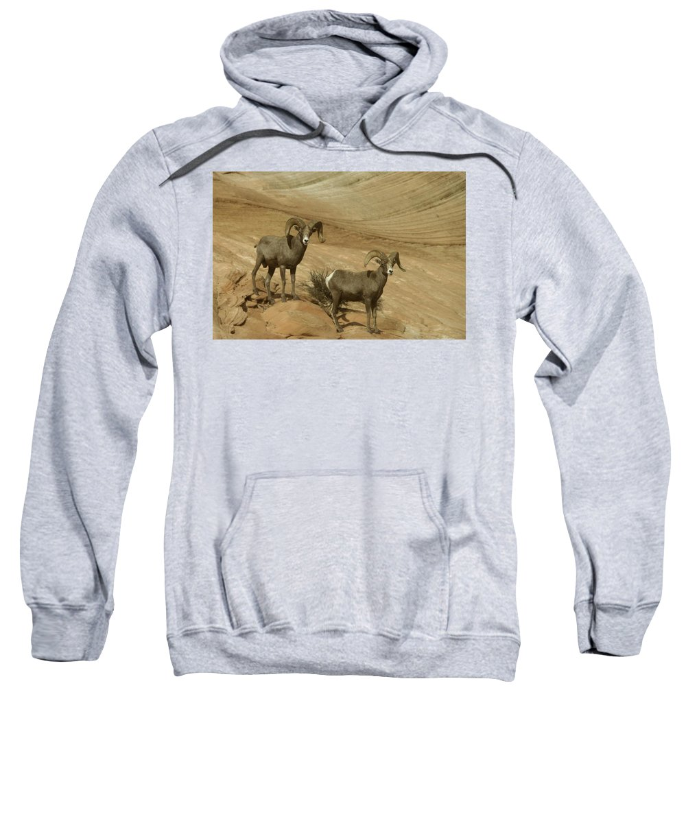 Horns Sweatshirt featuring the photograph Two Male Rams At Zion by Jeff Swan