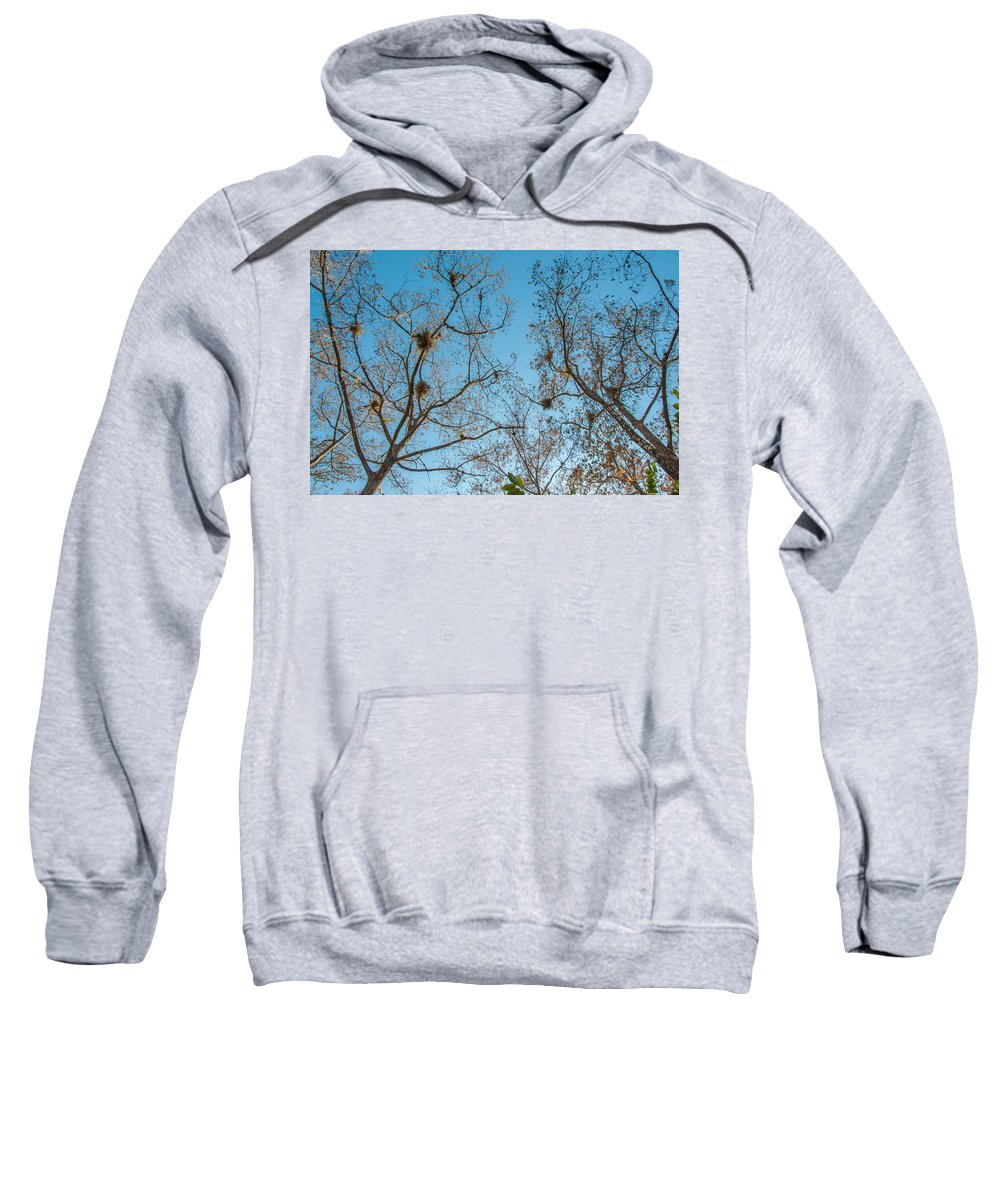 Blue Sweatshirt featuring the photograph Under The Trees by Amel Dizdarevic
