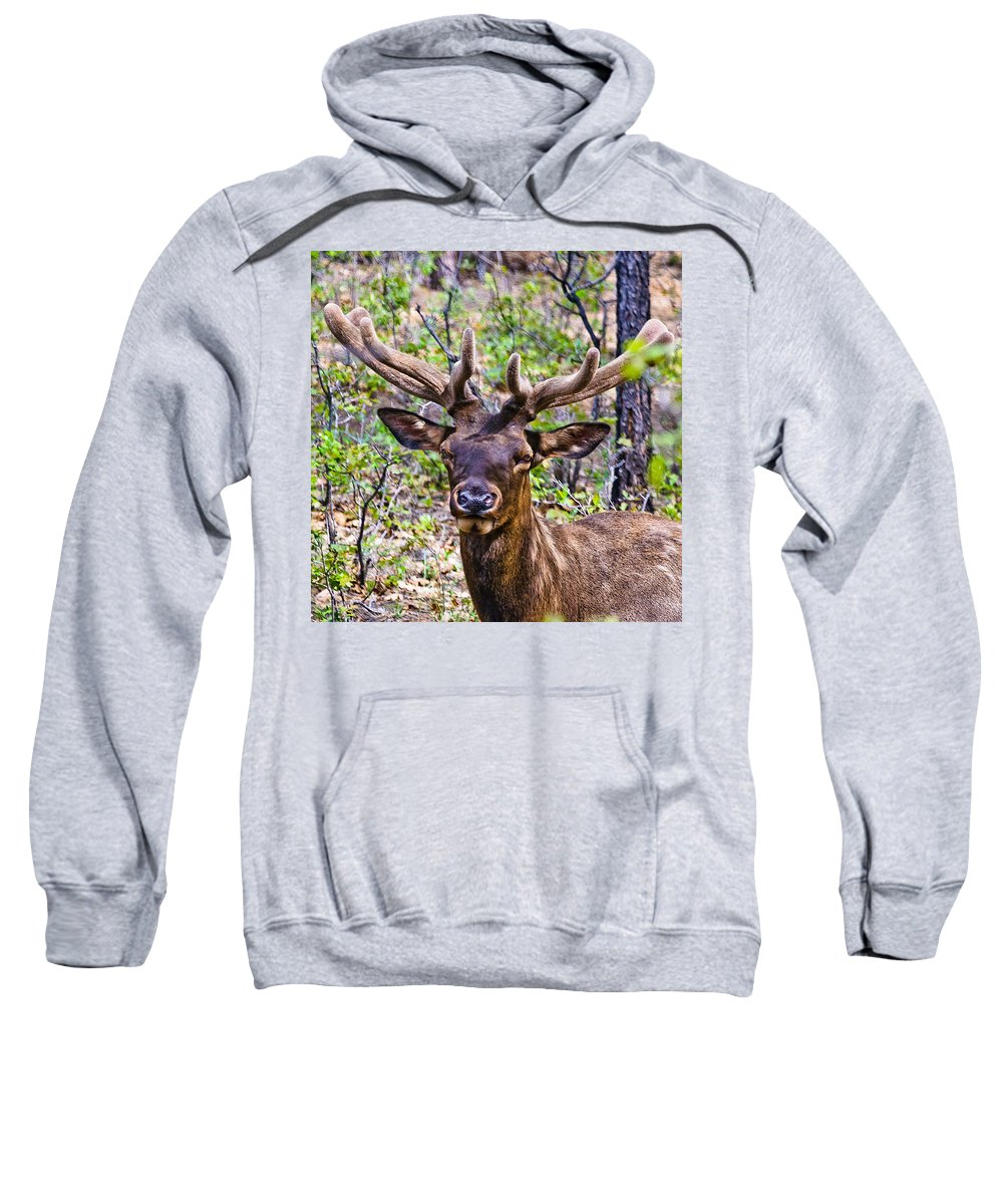 Yosemite National Park Sweatshirt featuring the photograph Up Close And Personal With An Elk by Bob and Nadine Johnston