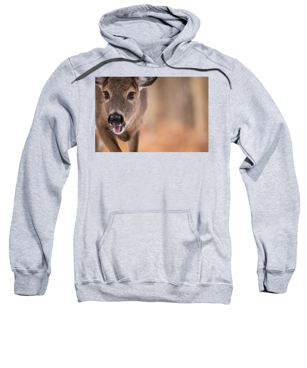 Deer Sweatshirt featuring the photograph Up Close White Tail by Karol Livote