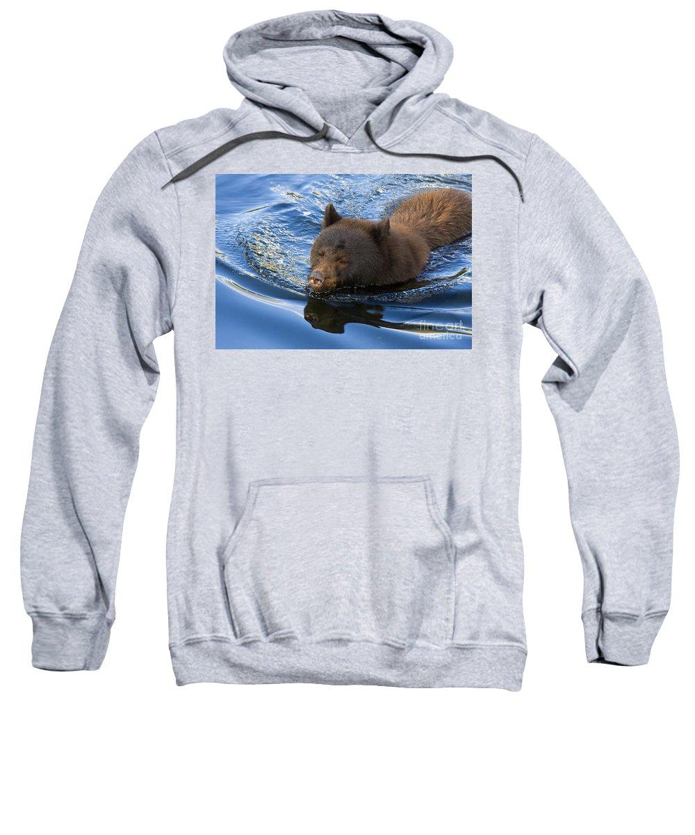 Bear Sweatshirt featuring the photograph Ursa Mirrored by Mike Dawson