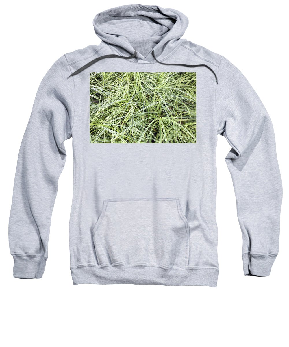 Variegated Sweatshirt featuring the photograph Variegated Monkey Grass Background by Jit Lim