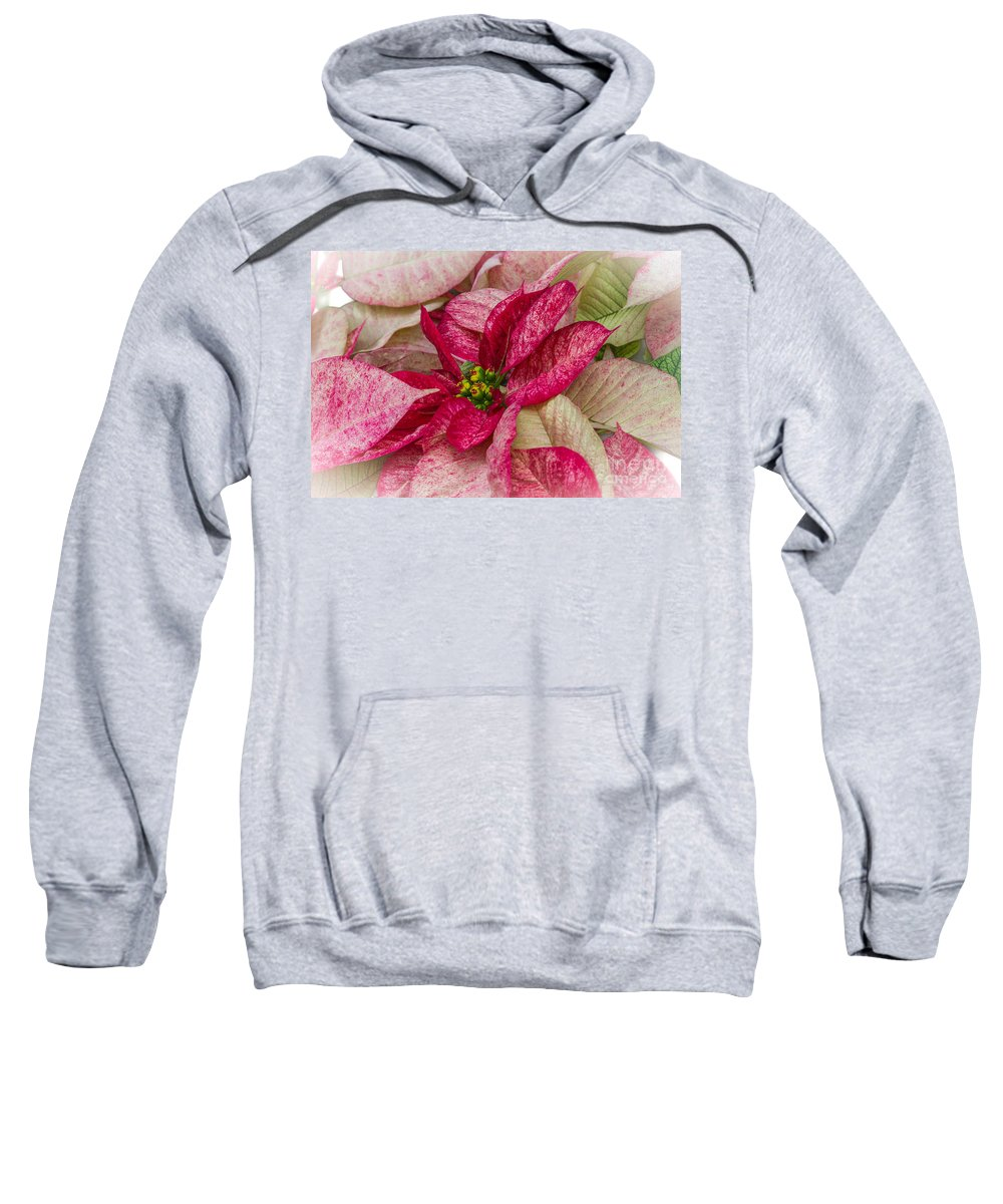 Poinsettia Sweatshirt featuring the photograph Varigated Poinsettia by Darleen Stry