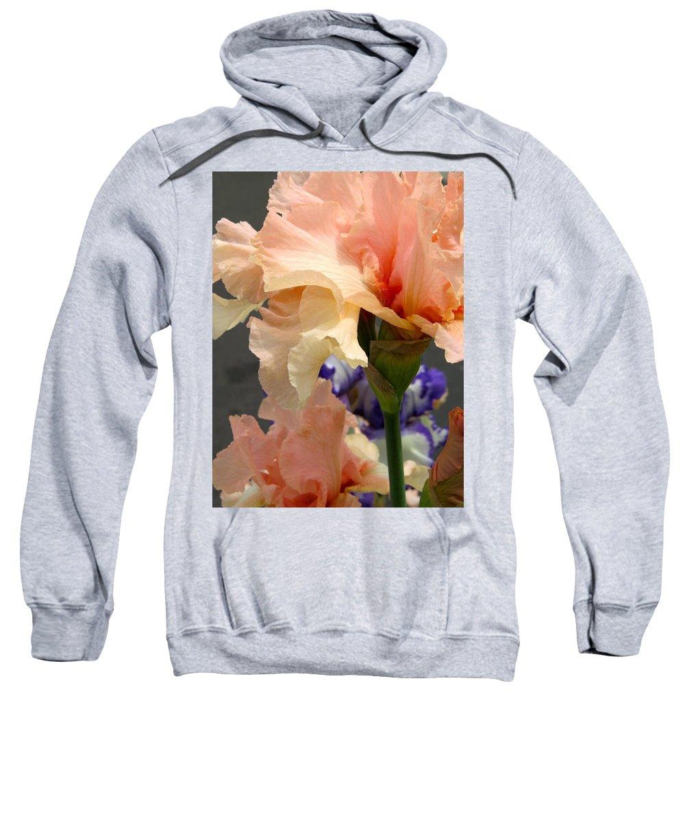Iris Sweatshirt featuring the photograph Velvety Soft Vanilla And Pink Iris by De Ann Troen