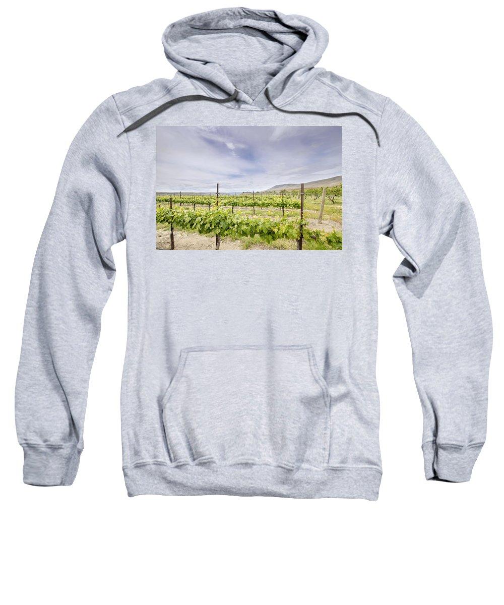 Winery Sweatshirt featuring the photograph Vineyard Landscape In Maryhill Washington State by Jit Lim