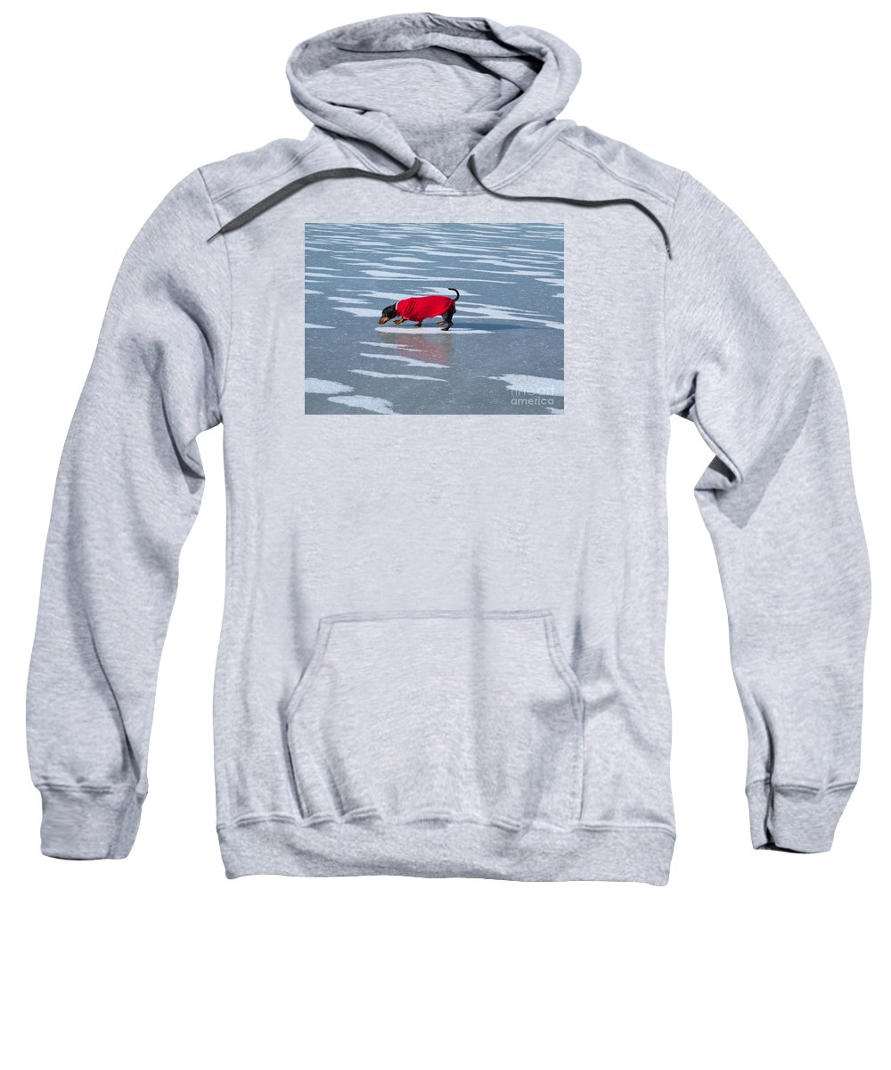 Dachshund Sweatshirt featuring the photograph Walking On Water by Ann Horn