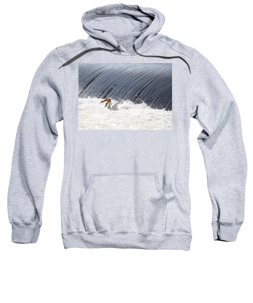American White Pelicans Sweatshirt featuring the photograph Washington White Pelicans by Carol Groenen