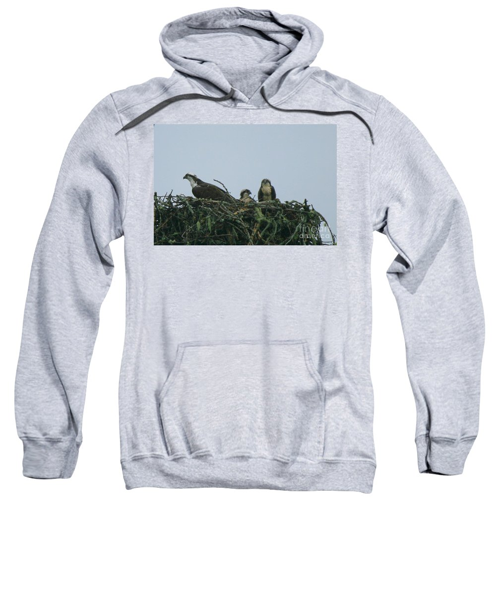 Osprey With Babies Sweatshirt featuring the photograph Mother Osprey Watchful Eye by Neal Eslinger