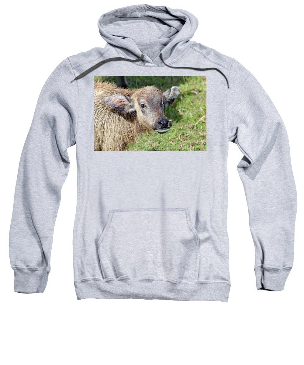 Buffalo Sweatshirt featuring the photograph Water Buffalo Calf by Paul Fell