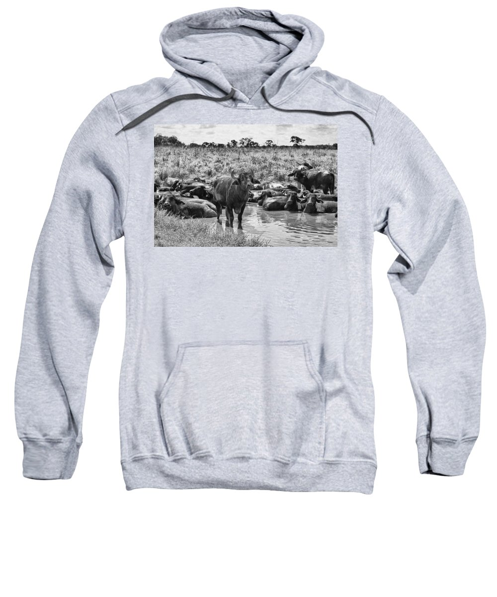 Water Buffalo Sweatshirt featuring the photograph Water Buffaloes-black And White by Douglas Barnard