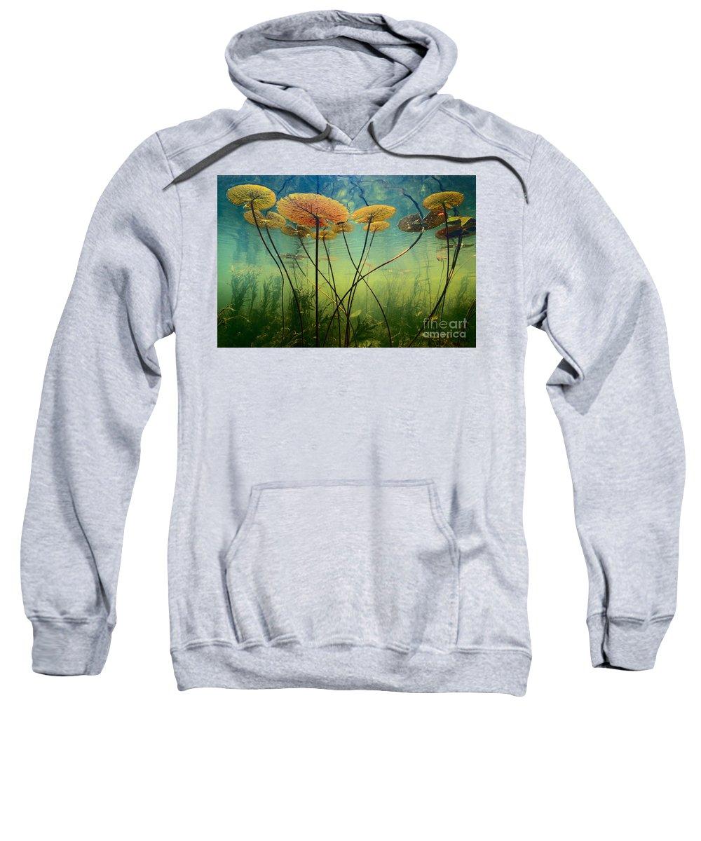 Delta Sweatshirts