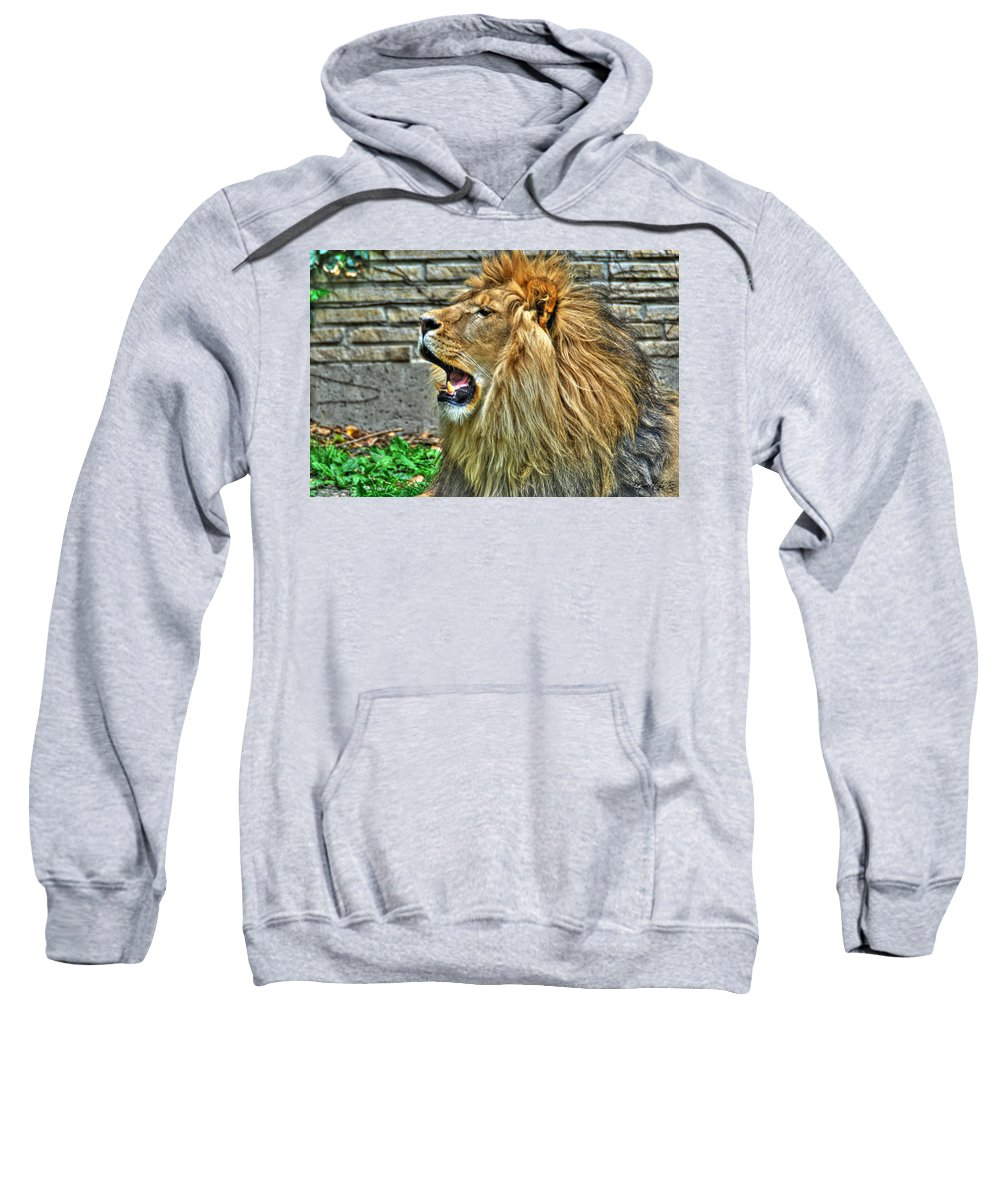 Lion Sweatshirt featuring the photograph When He Speaks...they Listen...lazy Boy At The Buffalo Zoo by Michael Frank Jr