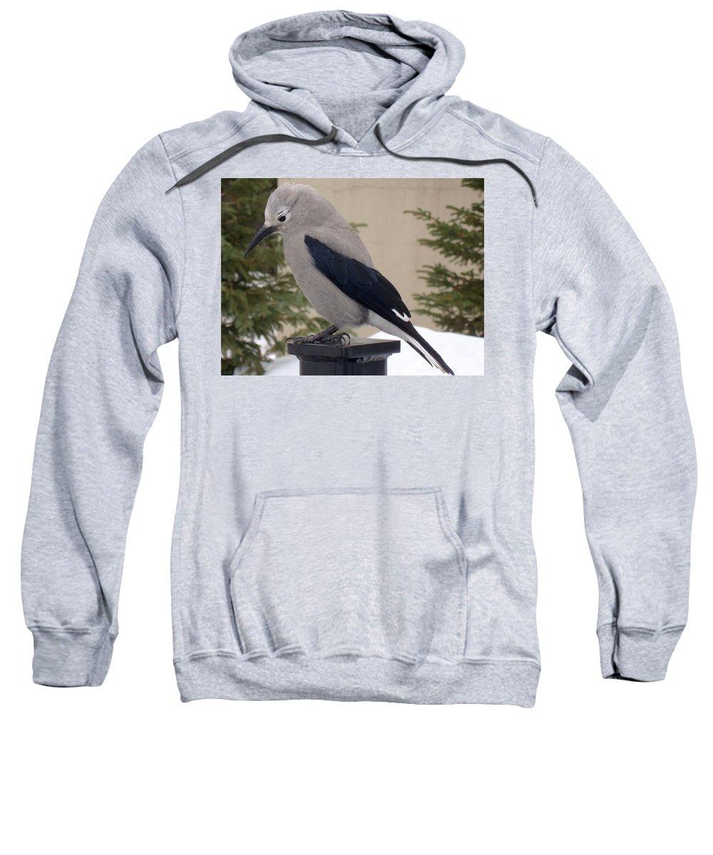 Bird Sweatshirt featuring the photograph Whiskey Jack Winter Profile by Ian Mcadie