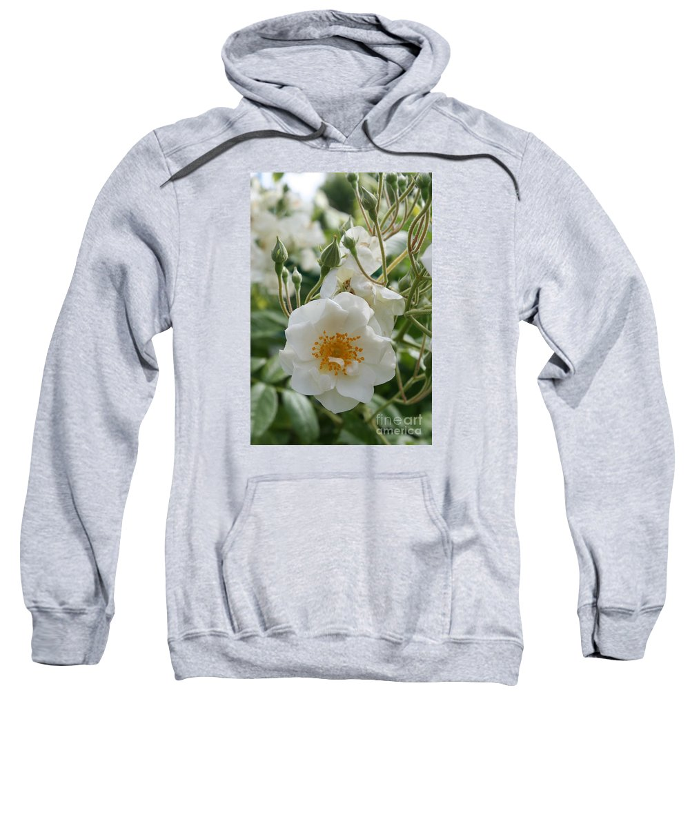 Roses Sweatshirt featuring the photograph White Dog Rose And Buds by Christiane Schulze Art And Photography
