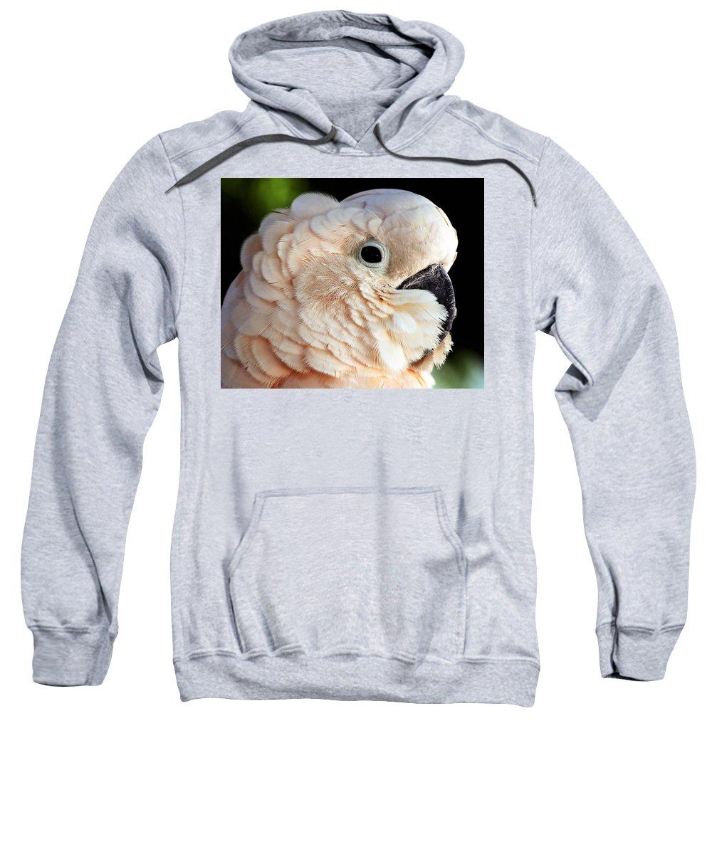 Beak Sweatshirt featuring the photograph White Parrot by Ingrid Smith-Johnsen