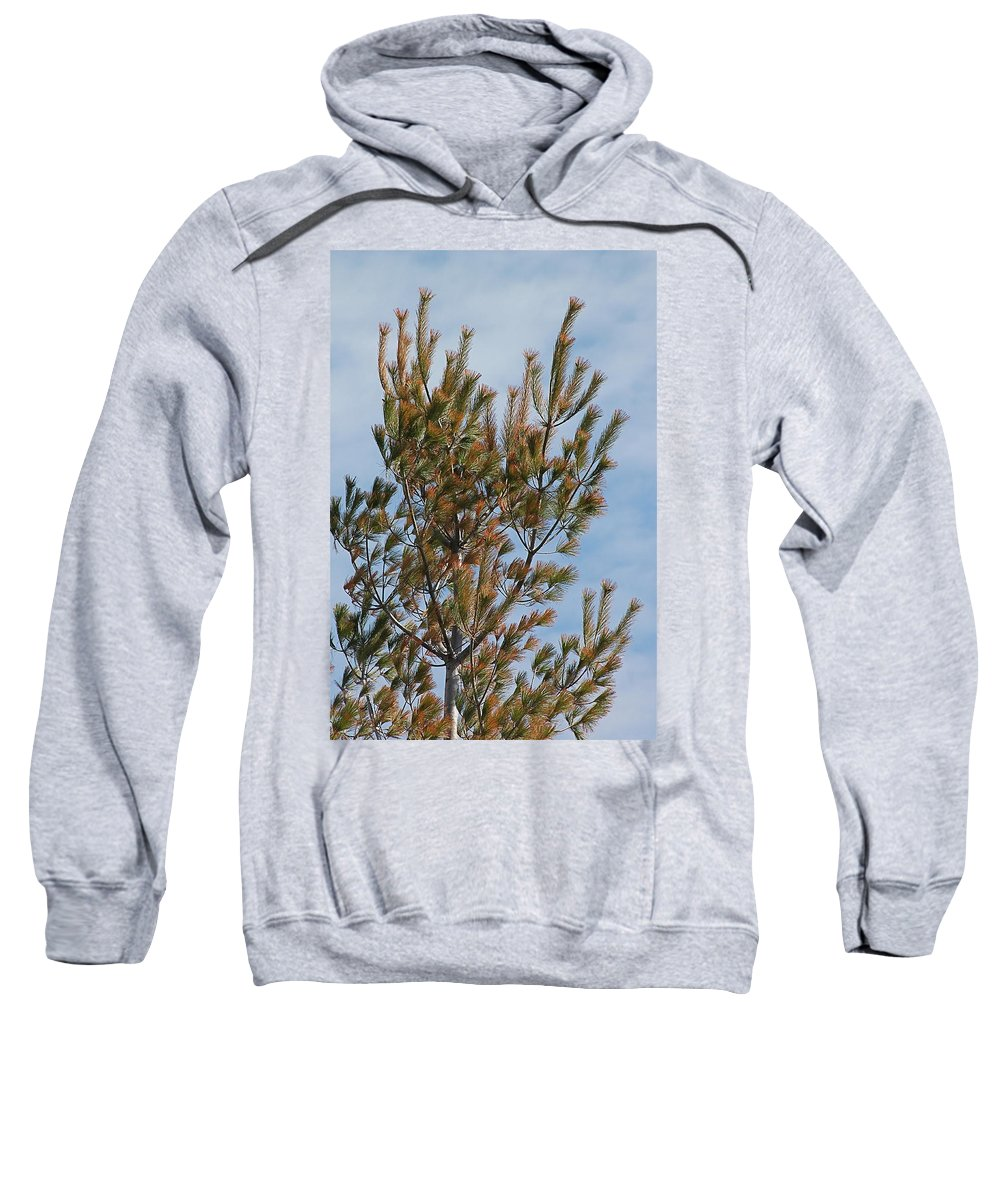 Pines Sweatshirt featuring the photograph White Pine In Spring by Wayne Williams