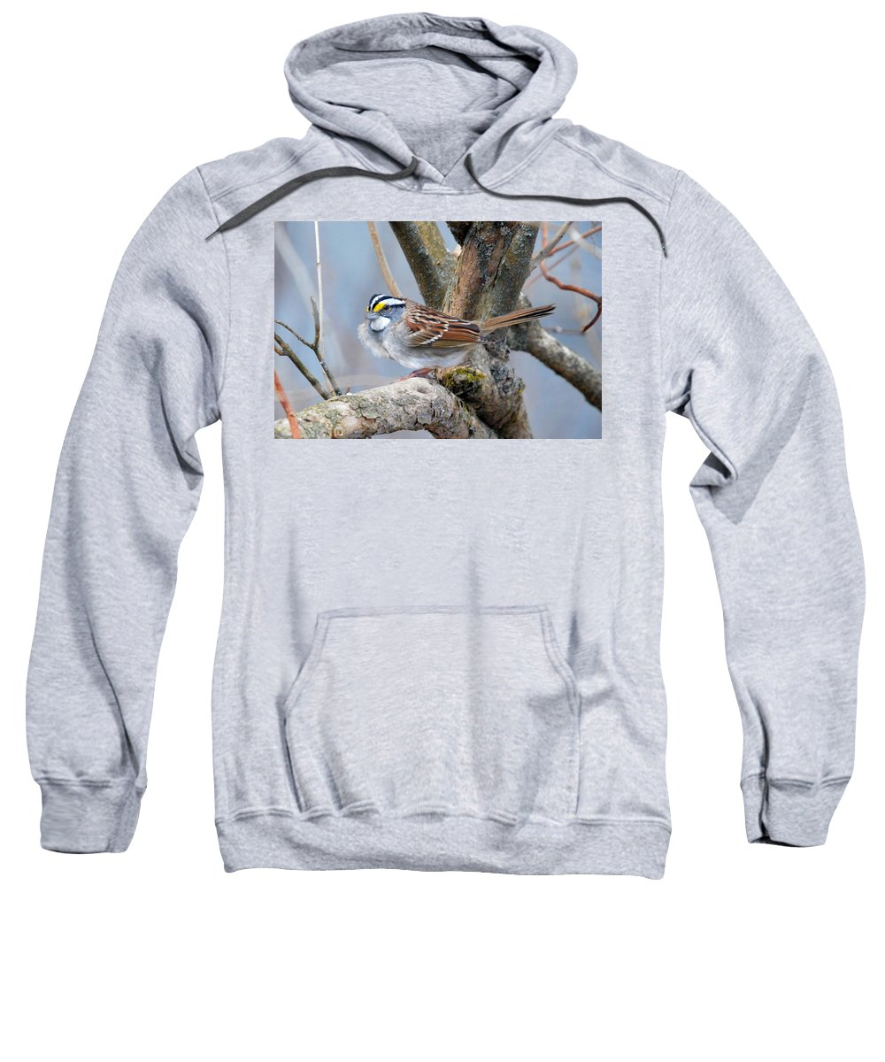 White-throated Sparrow Sweatshirt featuring the photograph Windy Perch by Thomas Phillips