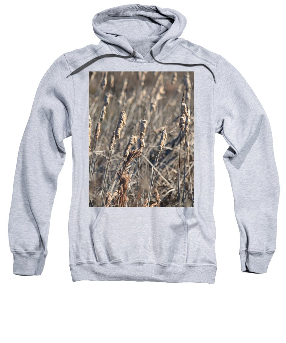 Winter Cattail Abstract Sweatshirt featuring the photograph Winter Cattail Abstract by Maria Urso