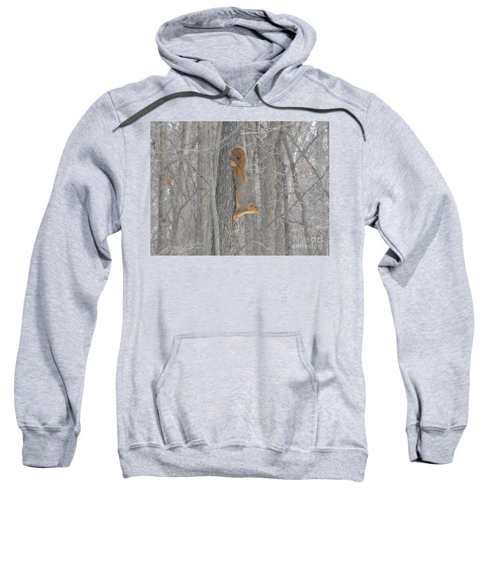 Nature Sweatshirt featuring the photograph Winter Squirrel by Erick Schmidt