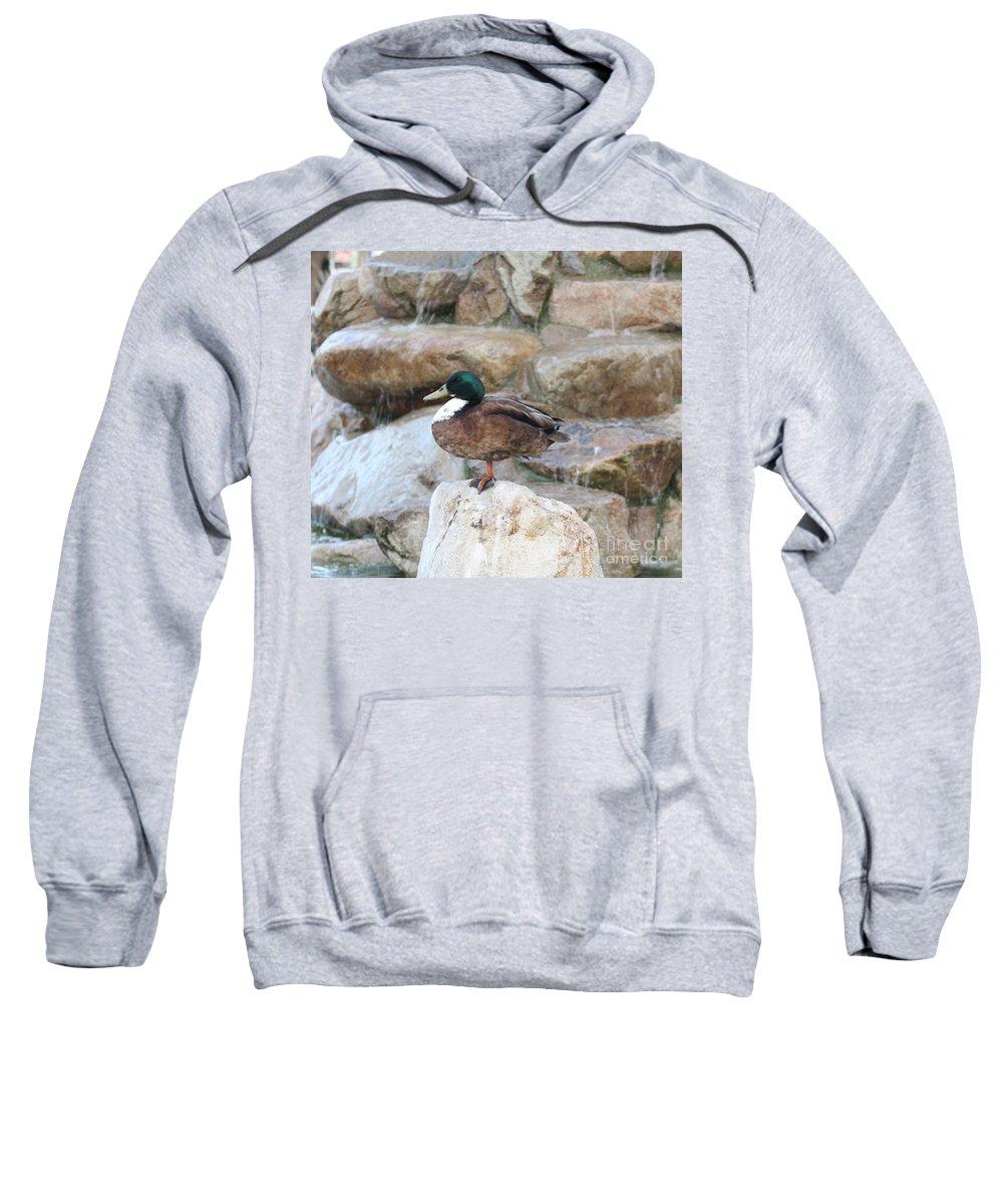 Wood Duck On Fountain Sweatshirt featuring the photograph Wood Duck On Fountain by John Telfer