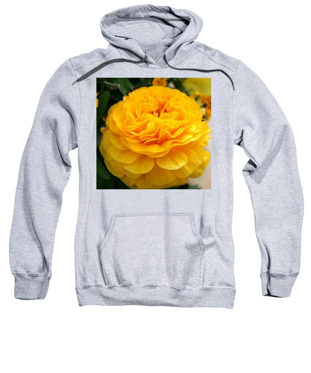 Buttercup Sweatshirt featuring the photograph Yellow Buttercup by Christiane Schulze Art And Photography