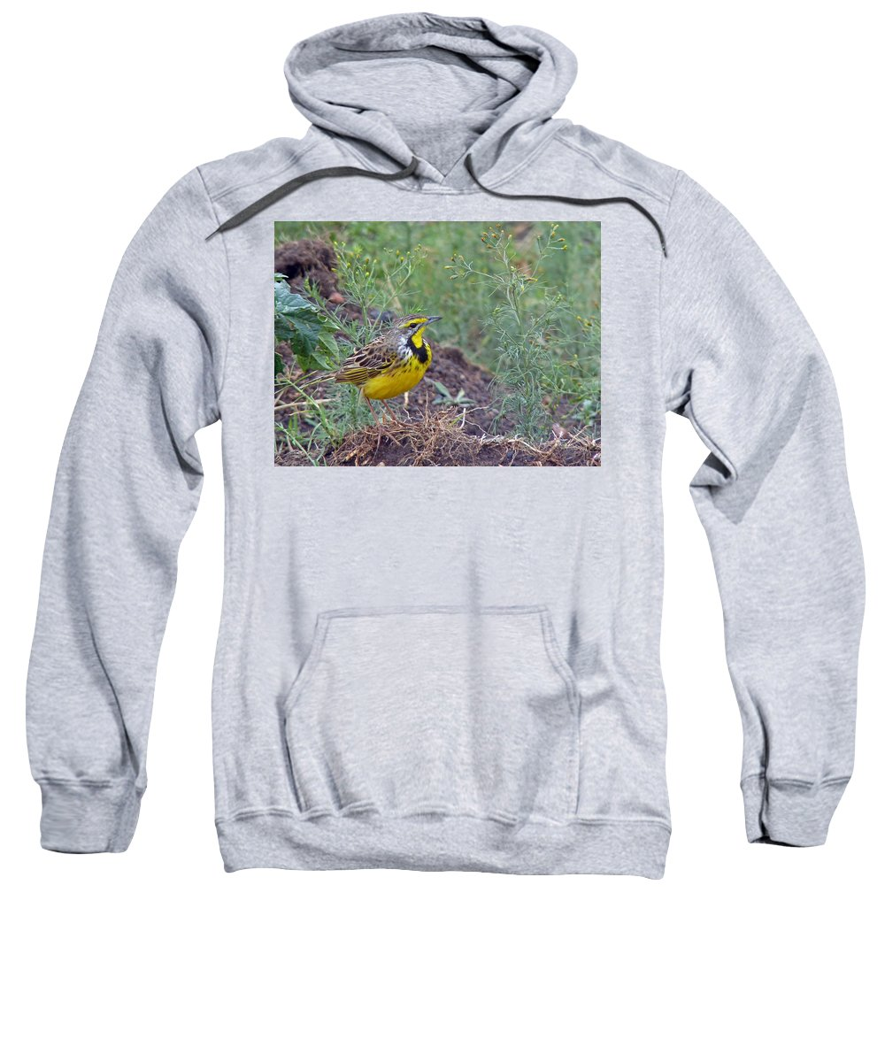 Longclaw Sweatshirt featuring the photograph Yellow-throated Longclaw by Tony Murtagh