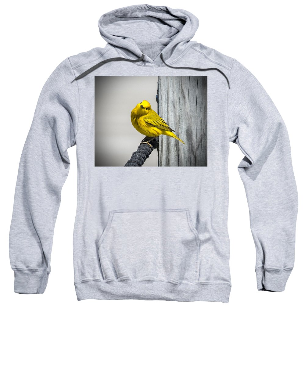 Bird Sweatshirt featuring the photograph Yellow Warbler by Jayne Gohr