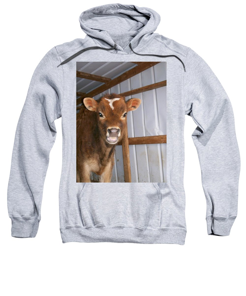 Cow Sweatshirt featuring the photograph Yes I'm Talking To You by Sara Raber