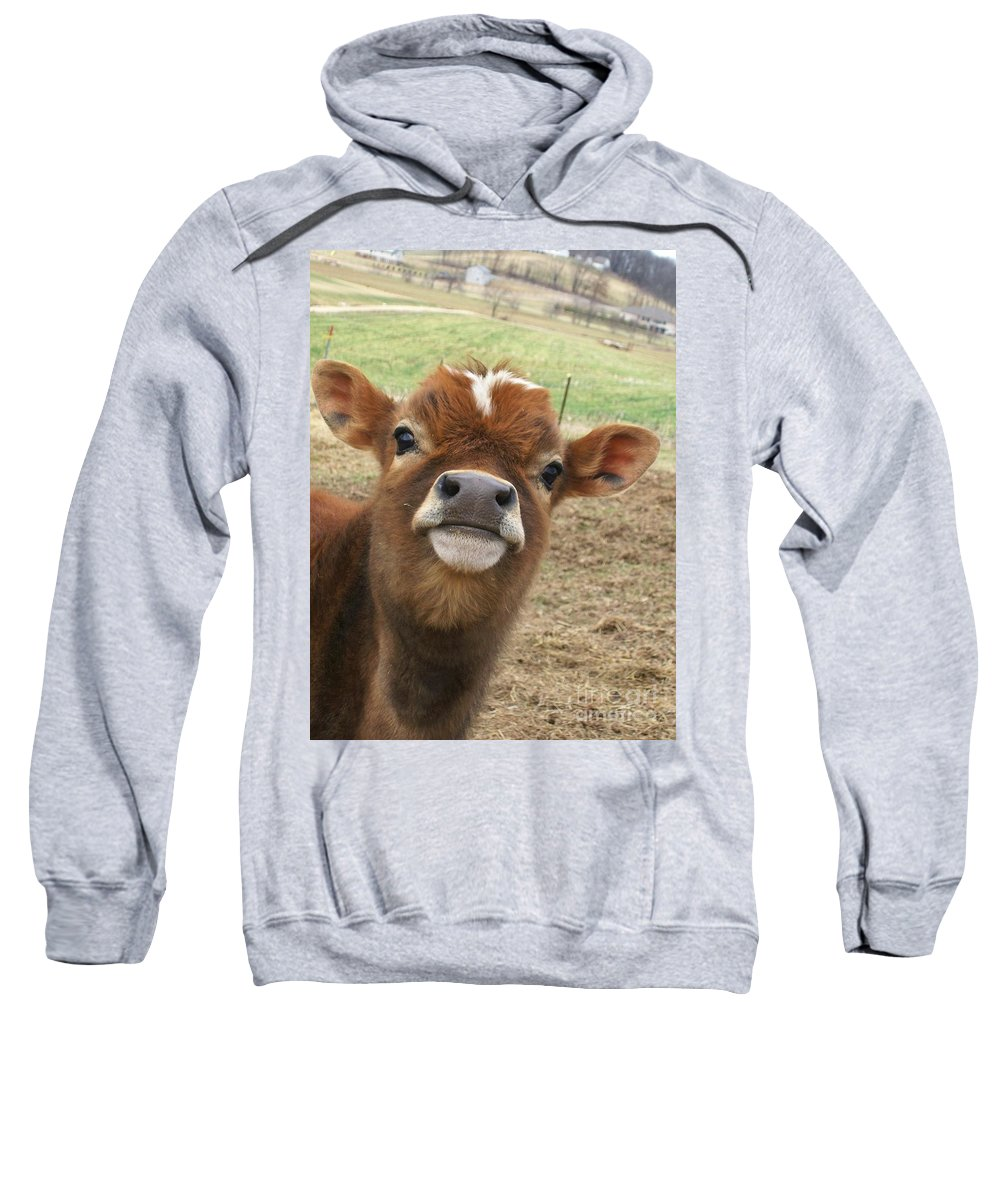 Cow Sweatshirt featuring the photograph You Looking At Me by Sara Raber
