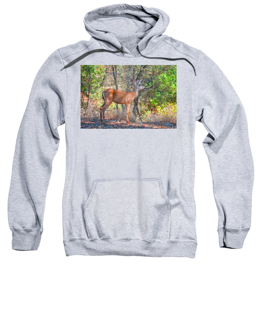 Fine Art Sweatshirt featuring the photograph Young Doe by Jim Thompson