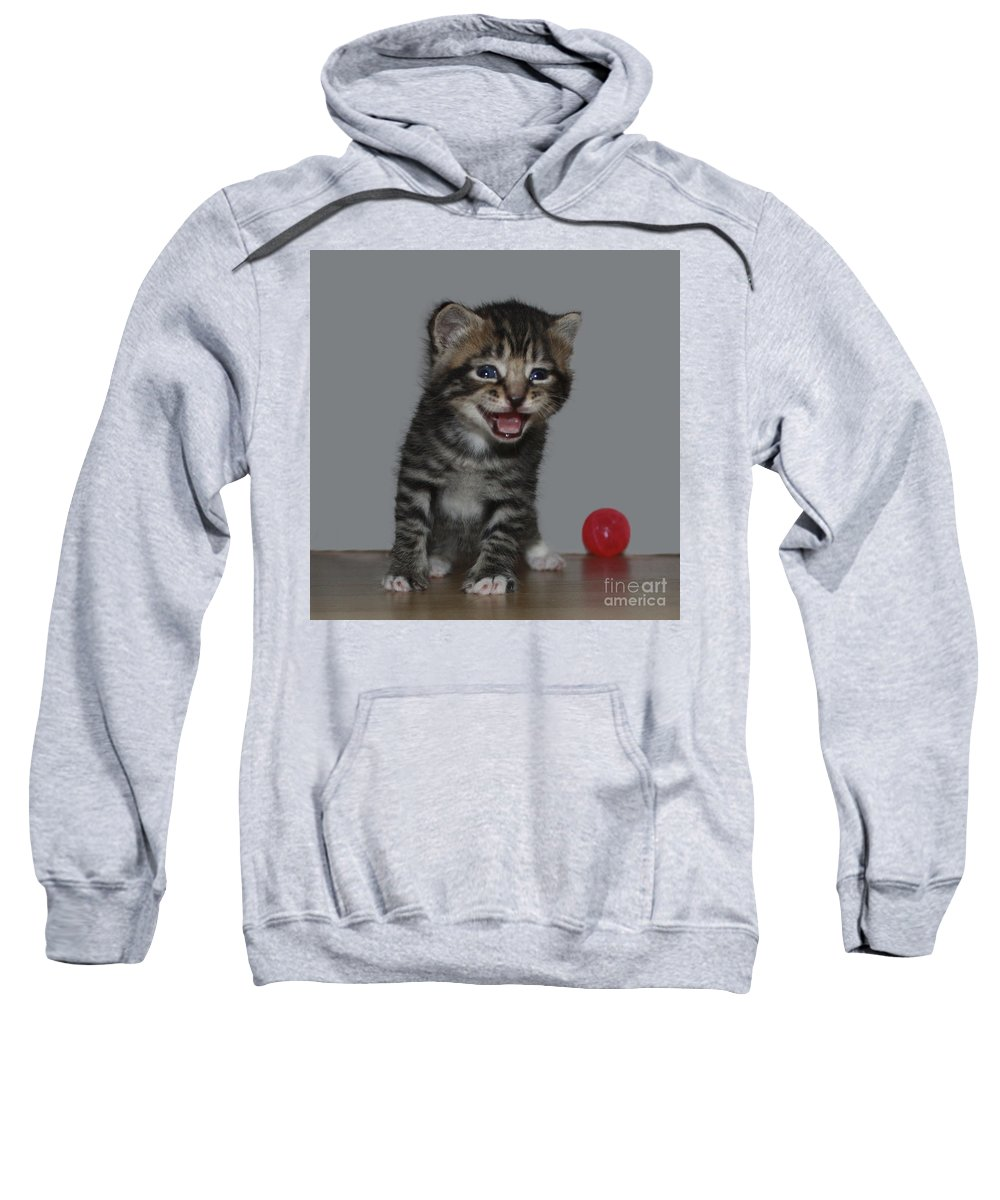 Funny Kitten Sweatshirt featuring the photograph You're Funny by Terri Waters